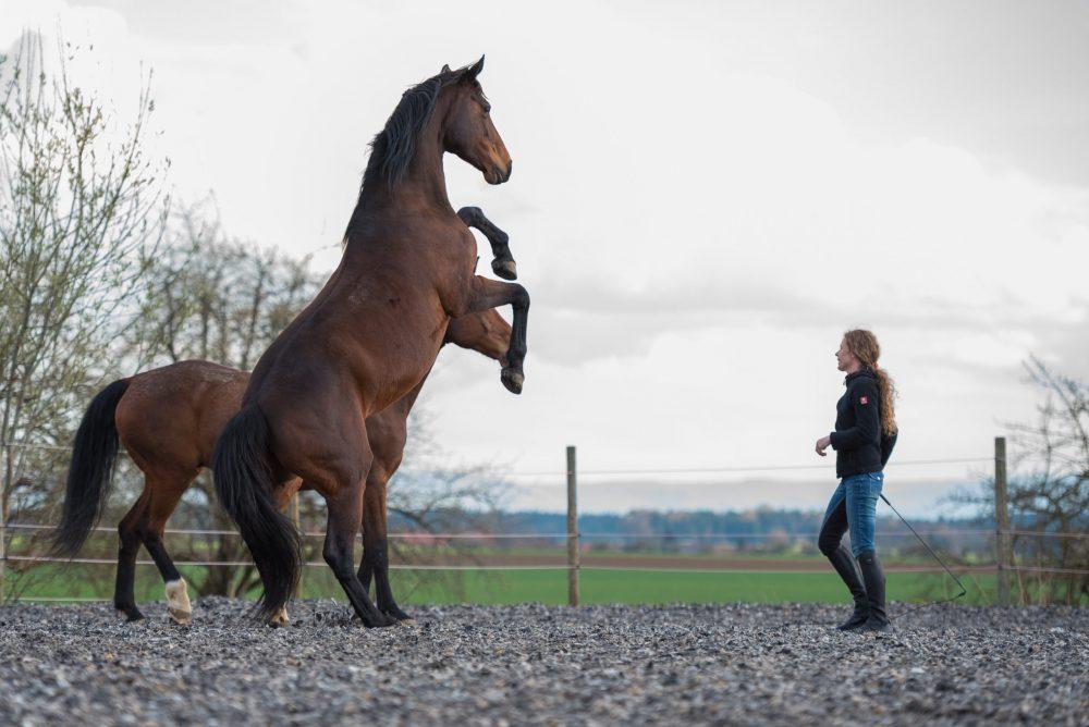 Susanne Lohas und Warmblutstute Billy - frei Steigen