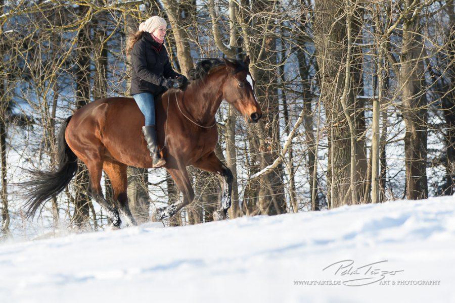 Susanne Lohas und Billy - frei im Galopp bergauf