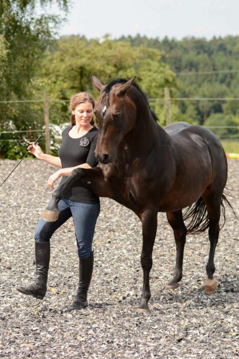 Susanne Lohas und Browny - Spanischer Schritt frei
