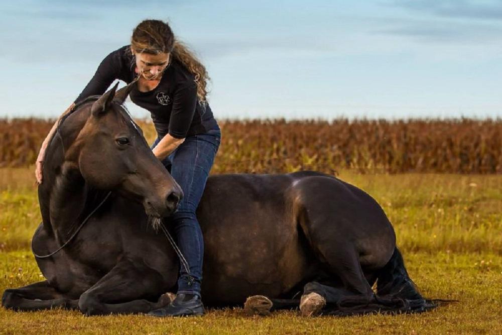 Browny - ein ganz besonderes Pferd