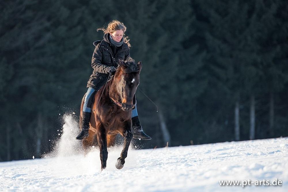 Im Galopp durch den Schnee - toll aber anstrengend für die Pferde