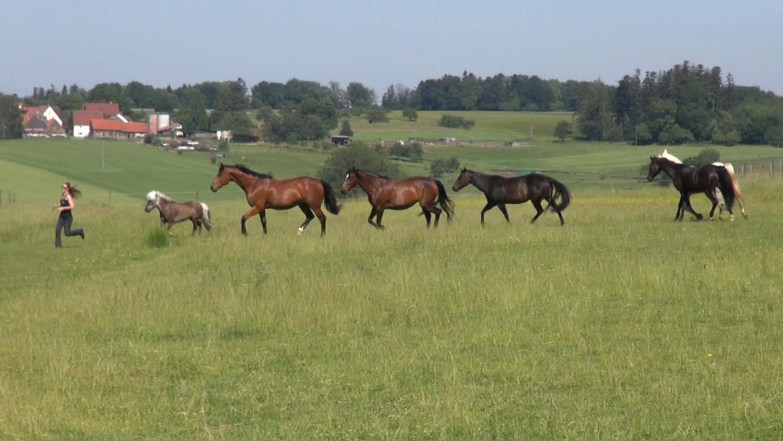 Susanne Lohas lenkt ihre Pferdeherde