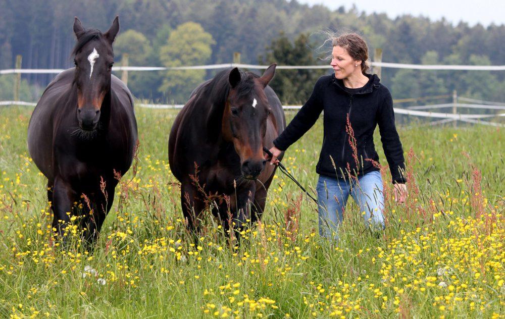 Susanne Lohas mit ihren beiden Stuten Dara und Browny frei auf der Blumenwiese