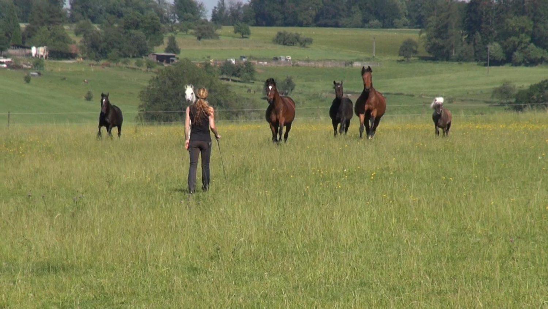 Susanne Lohas und die hergaloppierende Herde