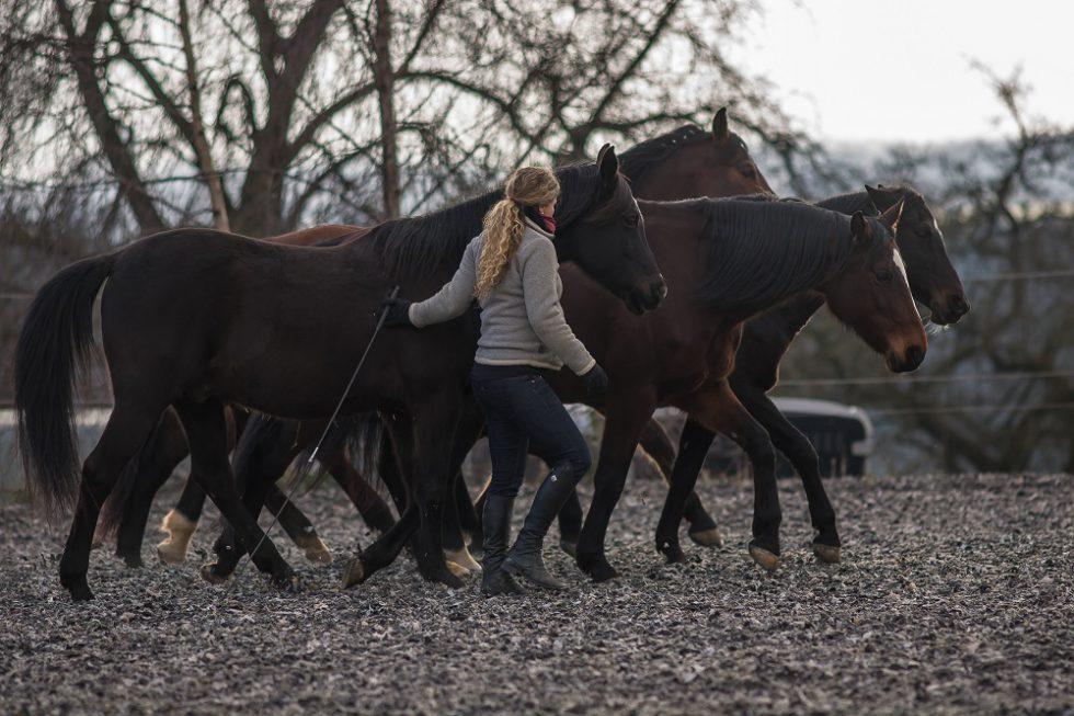 Susanne Lohas und ihre Pferde im Gleichschritt