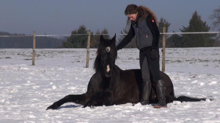 Susanne Lohas und Araber Sha Nabih frei auf der Winterkoppel