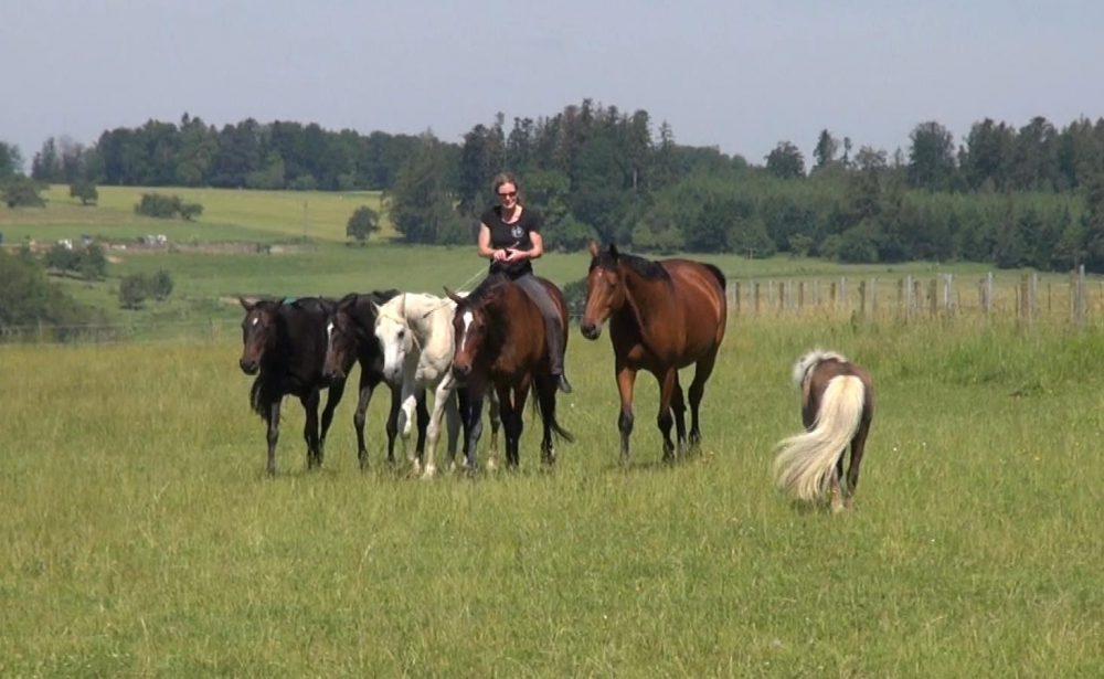 Susanne Lohas und ihre Pferde - frei auf Billy die Herde leiten