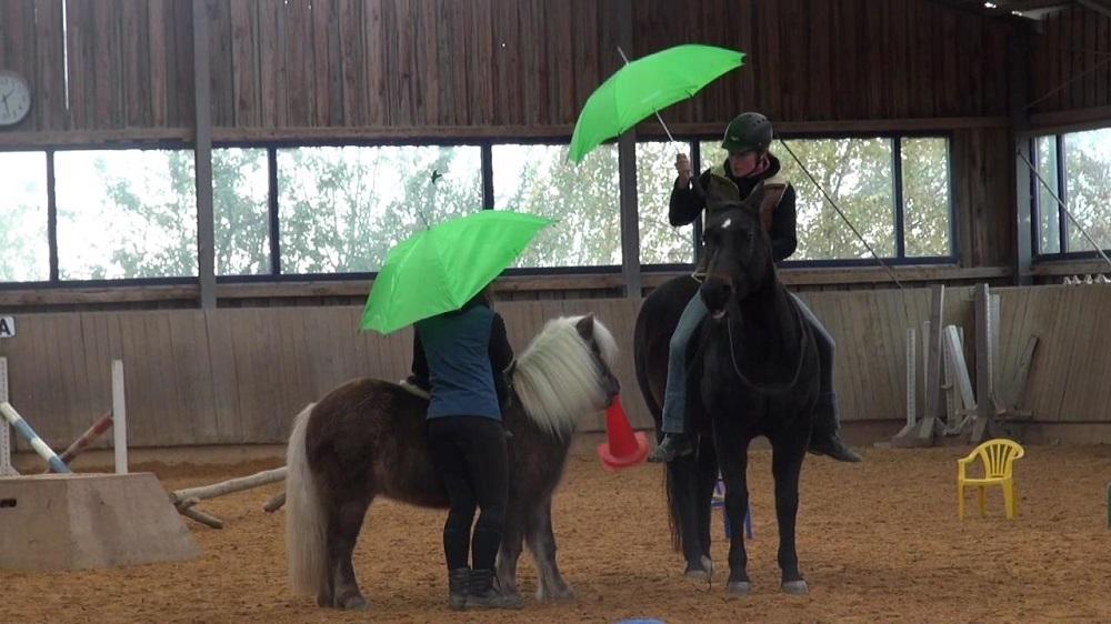 Geraffeltraining mit den Ponys