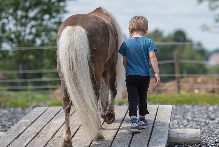 Pony-Professor Rembrandt überwindet vertrauensvoll mit seinem Menschenfreund die Wippe