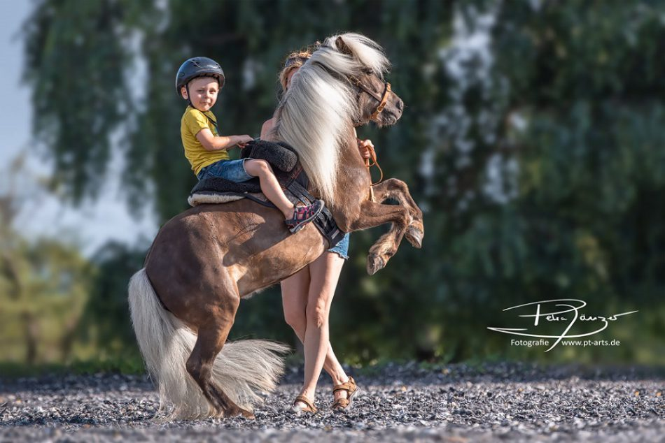 Remy unser bestes Kinderpony