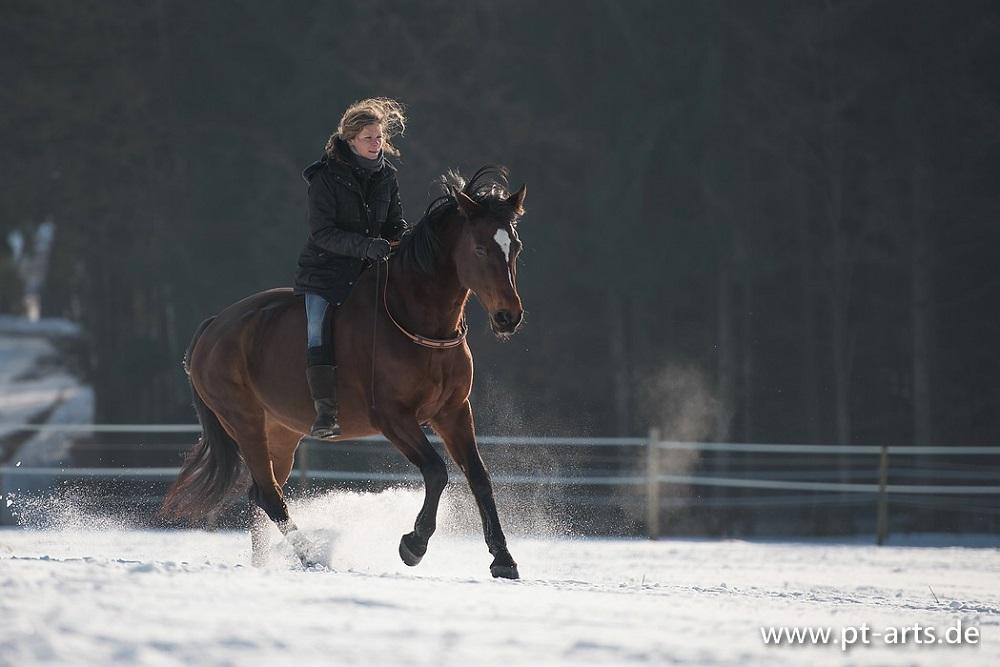 Mit Billy im Galopp durchs Winterwunderland