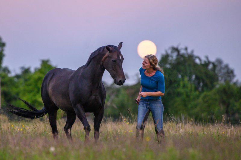 Browny und der Mond