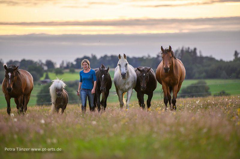 Die Herde zusammen mit mir frei auf der Koppel