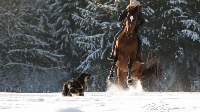 Susanne und Billy reiten frei im Schnee - pure Freude