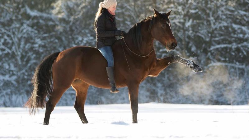 Susanne Lohas und Billy - Spanischer Schritt im Schnee