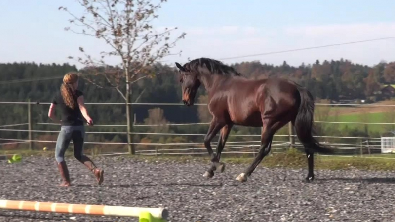 Cavaletti-Training frei