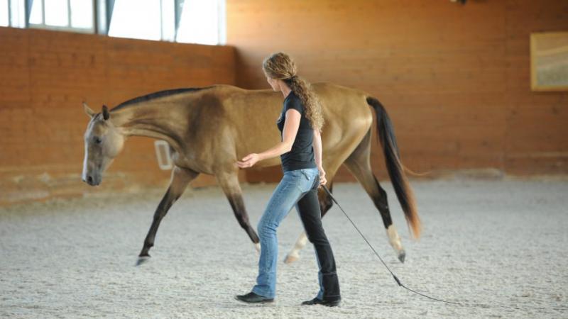 Susanne Lohas und Schülerpferd Achal Tekkiner Stute Chadie in der Freiarbeit- freies Longieren und Formen